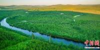 内蒙古大兴安岭20年累计完成人工造林超266万亩 - Nmgcb.Com.Cn